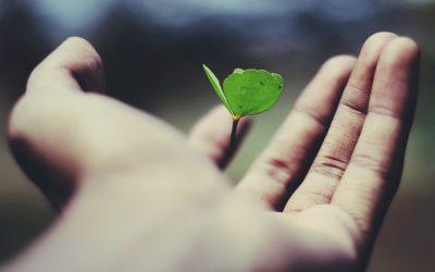 Luonto hoitaa epävarmaa mieltä